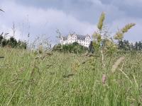 Schloss Lichtenberg von Lissy Pabst