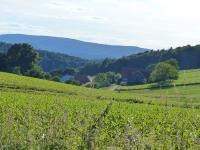 blick-odenwald-von-k-lang
