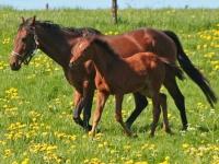 pferde-in-etzean-von-d-volz